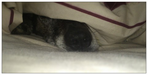 The time when Rigby hid under the duvet